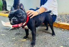 Photo of ¡Mientras más conozco la persona más…! El agresor de la perra Trufa deberá pagar una multa de 300,000 pesos